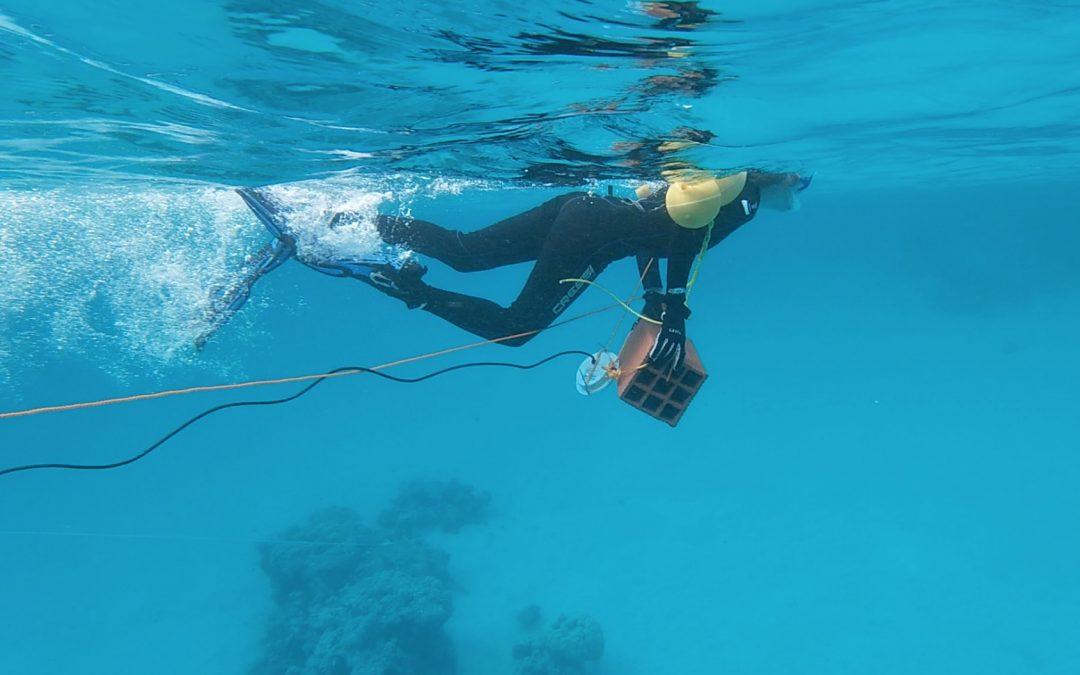 Estudian cómo el ruido antropogénico origina cambios en los animales marinos y sus ecosistemas en el océano