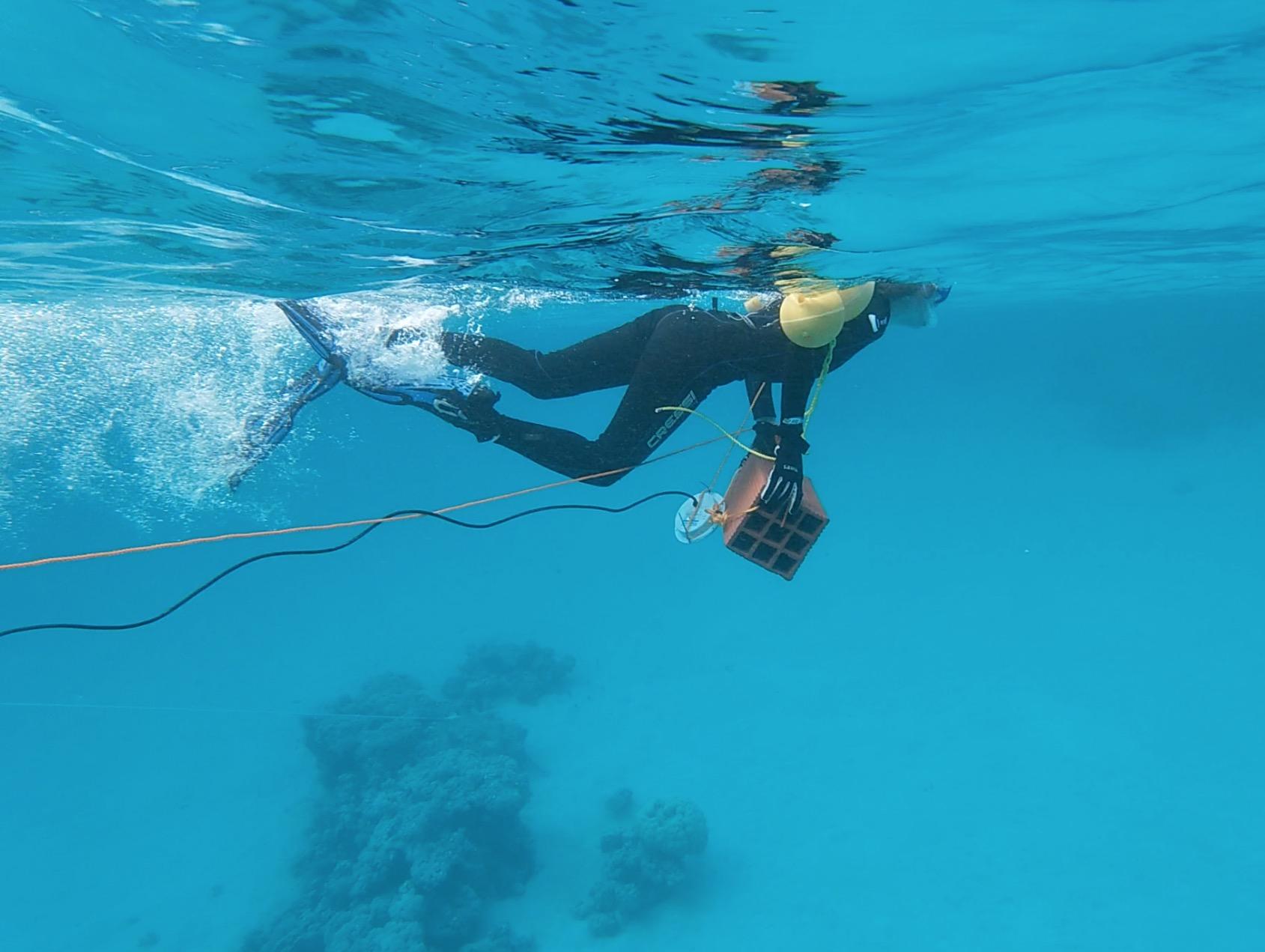 Trabajo de campo con un altavoz acuático en el Mar Rojo. / Michelle Havlik.