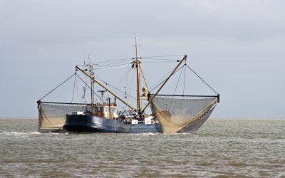 Científicos identifican aprovechamiento indebido en la industria pesquera global