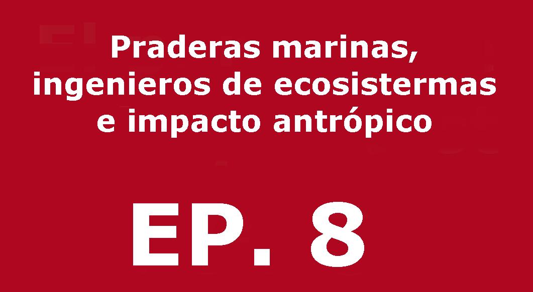 Praderas marinas, ingenieros de ecosistemas e impacto antrópico | Voces, CSIC Balears #08