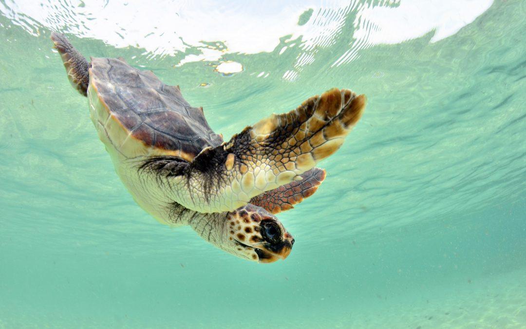 Informe Mar Balear 2021